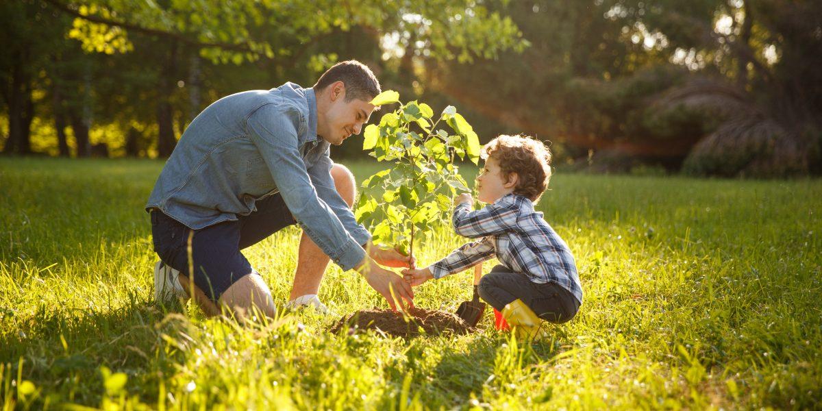 Un homme et son fils plantant un arbuste dans la nature